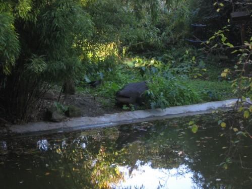crocodile,parc de montsouris,kotoko,hérisson,chats,perruches,gecko